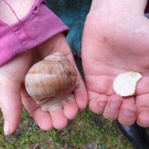 Weinbergschnecke auf Kinderhand