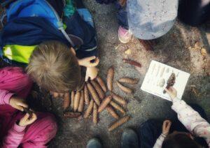 Kinder bestimmen Fraßspuren