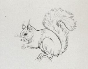 Eichhörnchenzeichnung