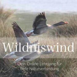 Wildniswind